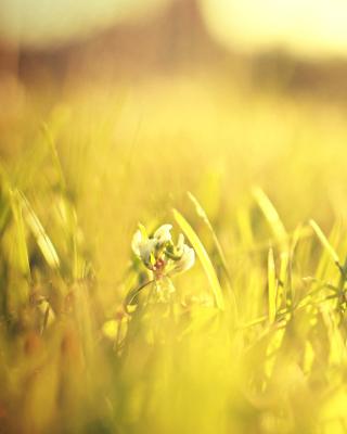 Macro Grass on Meadow - Obrázkek zdarma pro 240x400