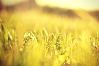 Macro Grass on Meadow Wallpaper for Android, iPhone and iPad