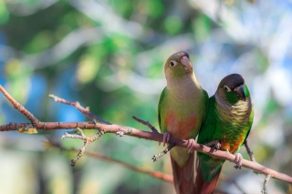 Two Beautiful Green Parrots Picture for Android, iPhone and iPad