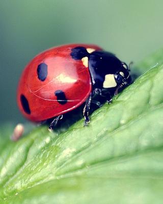 Beautiful Ladybug Macro - Obrázkek zdarma pro 128x160
