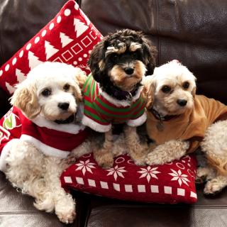 Cute Unbelievably Puppies - Obrázkek zdarma pro 128x128