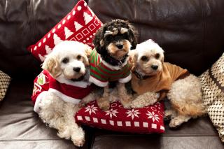 Cute Unbelievably Puppies - Obrázkek zdarma pro 176x144