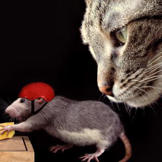 Cat, mouse and mousetrap - Obrázkek zdarma pro iPad mini