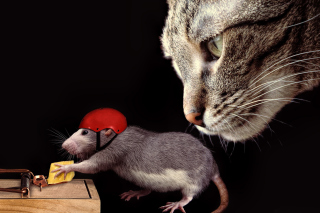 Cat, mouse and mousetrap Picture for Android, iPhone and iPad