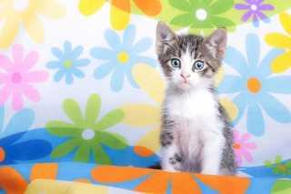 Baby Cat And Flowers Background for Android, iPhone and iPad