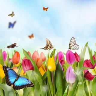 Butterflies and Tulip Field - Obrázkek zdarma pro iPad 3