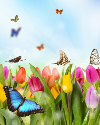 Butterflies and Tulip Field - Obrázkek zdarma pro Nokia Asha 306
