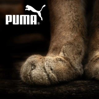 Puma Fluffy Logo - Obrázkek zdarma pro iPad mini