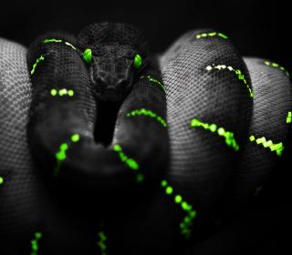 Black Mamba Snake - Obrázkek zdarma pro iPad