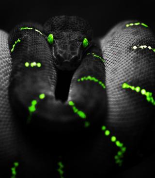 Black Mamba Snake - Obrázkek zdarma pro 320x480