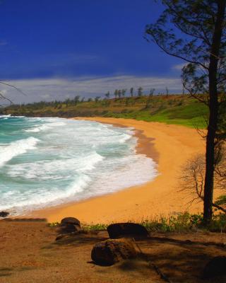 Donkey Beach on Hawaii - Obrázkek zdarma pro Nokia Asha 203