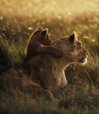 African Lion - Obrázkek zdarma pro 240x432