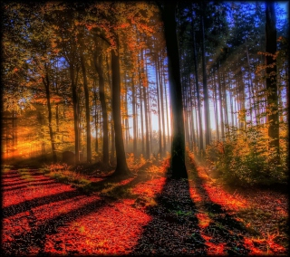 awesome bright autumn scenery - photo #19