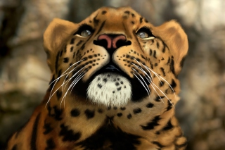 Leopard Art Picture Wallpaper for Android, iPhone and iPad
