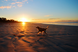 Dog At Sunset Wallpaper for Android, iPhone and iPad