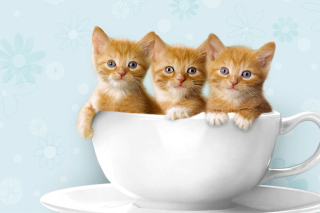 Free Ginger Kitten In Cup Picture for Android, iPhone and iPad
