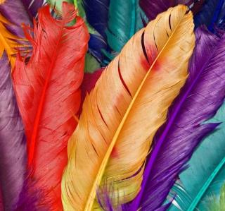 Colored Feathers - Obrázkek zdarma pro iPad