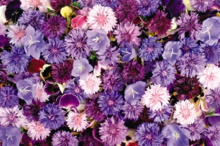 Floral Carpet Background for Android, iPhone and iPad