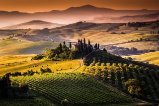 Free Field In Italy Toscana Picture for Android, iPhone and iPad