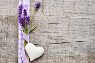 Branch Of Lavender Background for Android, iPhone and iPad