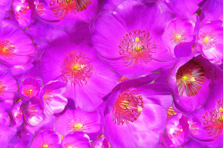 Drawn Purple Flowers Wallpaper for Android, iPhone and iPad