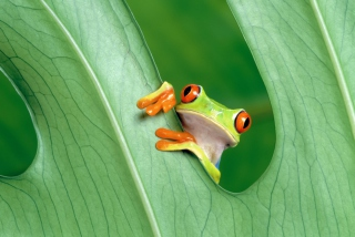 Little Frog Wallpaper for Android, iPhone and iPad