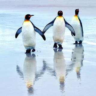 King penguins - Obrázkek zdarma pro iPad