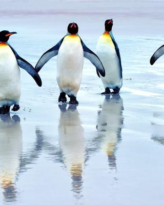 King penguins - Obrázkek zdarma pro Nokia C1-02
