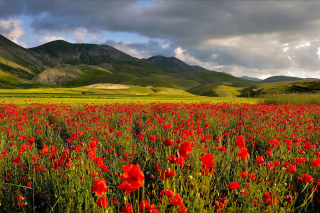 Poppy Field - Obrázkek zdarma pro Sony Xperia Tablet Z