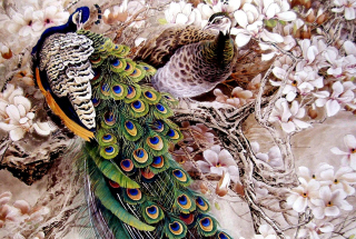 Peacock Painting - Obrázkek zdarma pro 720x320