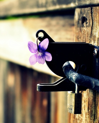Flowers on the fence - Fondos de pantalla gratis para Nokia C2-01
