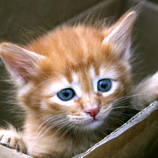 Uber Kittens - Obrázkek zdarma pro iPad mini 2