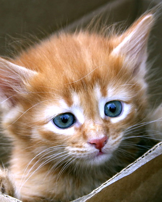 Uber Kittens - Obrázkek zdarma pro 640x960