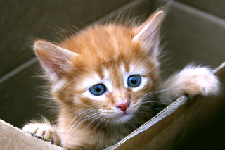 Free Uber Kittens Picture for Android, iPhone and iPad