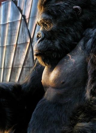King Kong Film - Obrázkek zdarma pro iPhone 5S