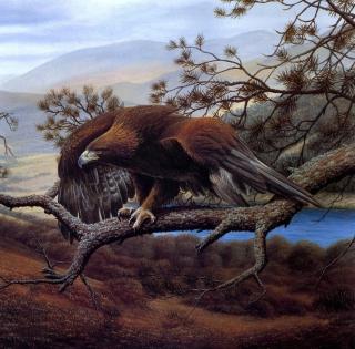Eagle On Branch - Obrázkek zdarma pro 208x208