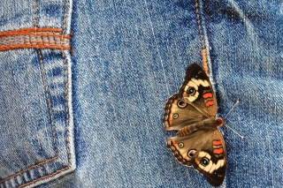 Butterfly Likes Jeans Wallpaper for Android, iPhone and iPad