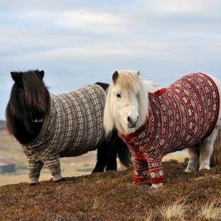 Shetland Ponies - Obrázkek zdarma pro 128x128