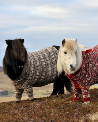 Shetland Ponies - Obrázkek zdarma pro 320x480