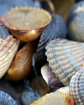 Macro Shells - Obrázkek zdarma pro 240x400