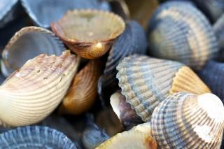 Macro Shells - Obrázkek zdarma pro 1152x864