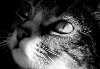 Cat - Fondos de pantalla gratis para Sony Ericsson XPERIA PLAY