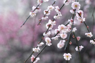 Spring Bloom Picture for Android, iPhone and iPad