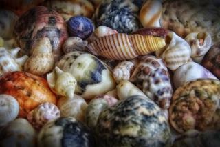 Colorful Shells - Obrázkek zdarma pro Nokia Asha 210