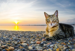 Free Cat On Beach Picture for Android, iPhone and iPad