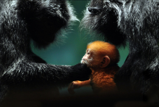 Baby Monkey With Parents - Obrázkek zdarma pro Widescreen Desktop PC 1920x1080 Full HD