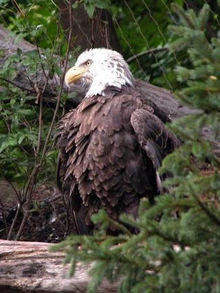 Bird Of Prey - Obrázkek zdarma pro 480x854