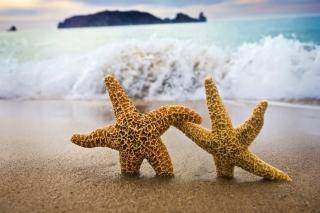 Sea Stars Dance - Obrázkek zdarma pro Fullscreen Desktop 1600x1200
