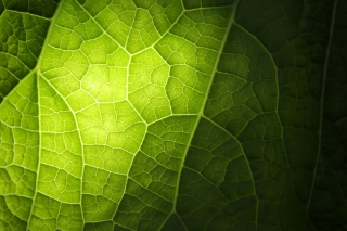 Free Green Leaf Macro Picture for Android, iPhone and iPad