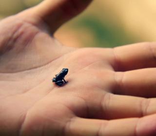 Little Black Frog - Obrázkek zdarma pro 1024x1024